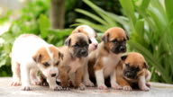 Group of little puppies dog video
