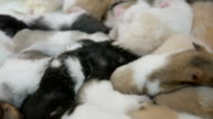 group of many young hamster mouses white brown and black color sleeping together for sale in a pet shop in THAILAND video