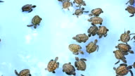 Group of newborn turtle in the water video
