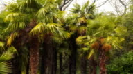 Group of palm trees video