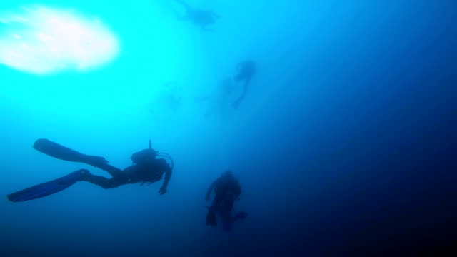 Group of Scuba Divers Ascending video