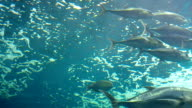 Group of sea fish swimming. video