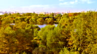 Grove, river and city background video