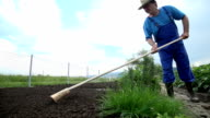 Grower lifts the board used to split garden into divisions video