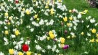growing flowers - panning shot of flowers on green meadow video