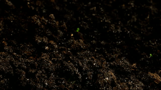 Growing Green Cucumber Plants Agriculture Spring Timelapse video