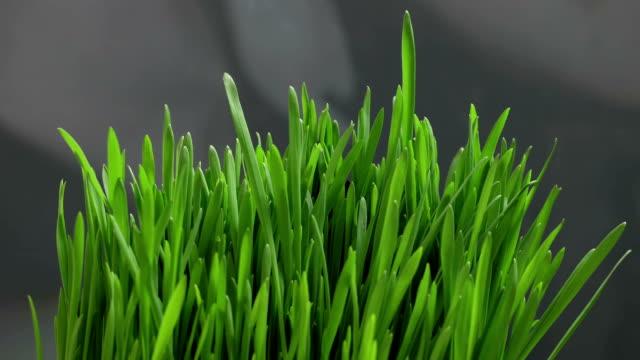 Growing Green Grass video