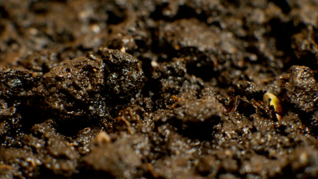 Growing Green Plants Under The Ground video