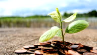 Growing Investments - Coins with Plant video