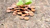 Growing Money Metaphor - Investment video