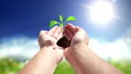 Growing plant in hands video