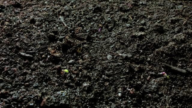 growing seeds topview wide video