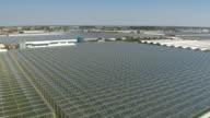 AERIAL: Growing vegetable seedlings in vast modern horticultural glasshouses video
