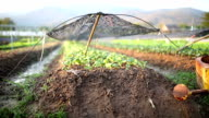 Growing Vegetables and watering pot video