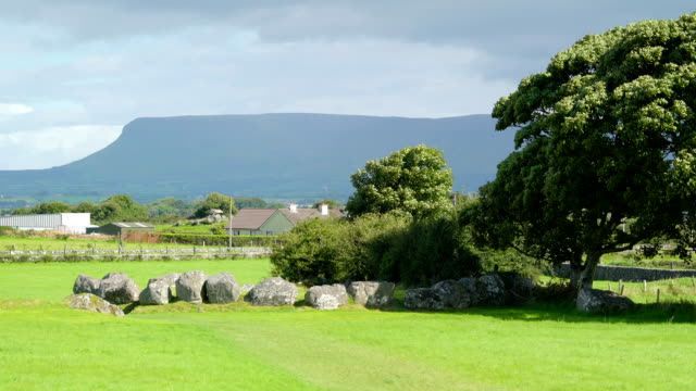 Gtreen pasture and a big tree in Carrowmore Ireland video