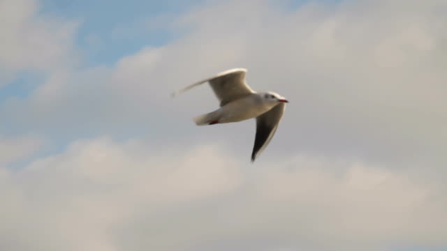 A gull flies against the background of clouds video