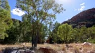 Gum tree at Waterhole Northern Territory, Australia video