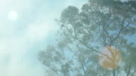 Gum trees and bush fire smoke on a windy day video