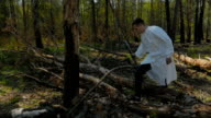 A guy walks around the felled trees video