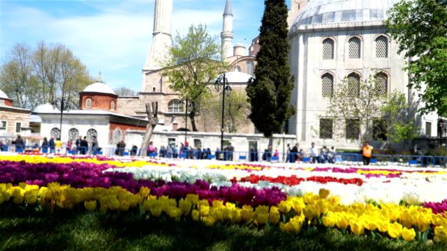 4K Hagia Sophia with Tulips  - Stock video video