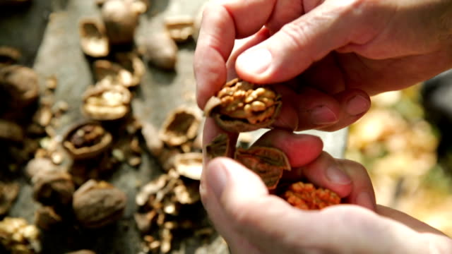Hammer and cracked walnuts video