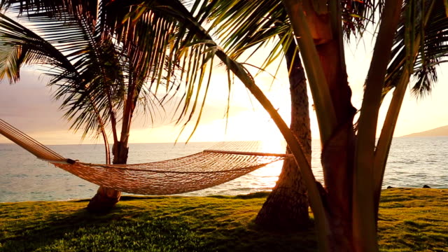 Hammock and Palm Trees at Sunset Gorgeous Sun Flares. video