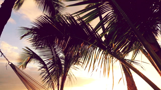Hammock and Palm Trees at Sunset. Instagram Color Tone. video