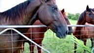 Hand Feeding Horses video
