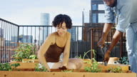 Hand Held Shot of Couple Gardening on Rooftop video