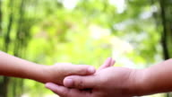 Hand holding a little green plant video