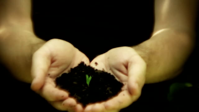 Hand holding growing seedling video