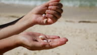 Hand holding seashells on the beach video