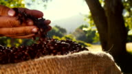 Hand of Farmer picking up and checking his coffee beans video