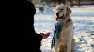 Hand shaking between dog and boy video