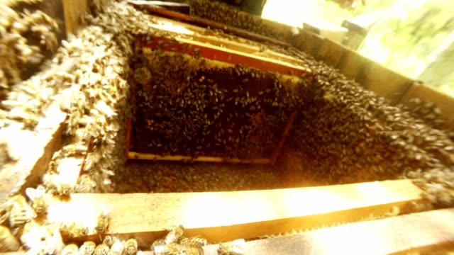 Hand Takes Frame For Honeycombs From Hive Wth Bees Sun Shines video