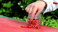 hand wild strawberry fast video