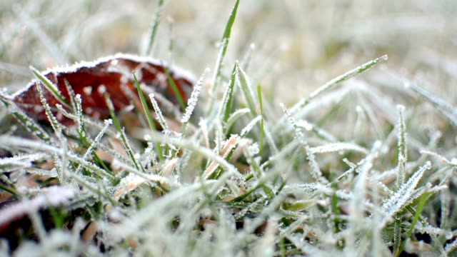 Handheld detail of frosty grass lawn video