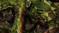 Hand-held shot of a pan with burned Indian mix of herbs and spices video