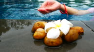 hands carefully take care flowers at swimming pool video