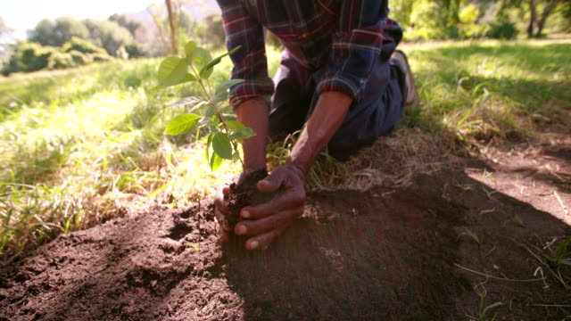 Hands carrying a sapling planting new tree video
