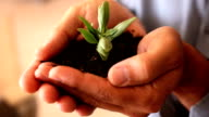 Hands holding a small growing plant video