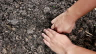 Hands Planting a Seed in Ground video