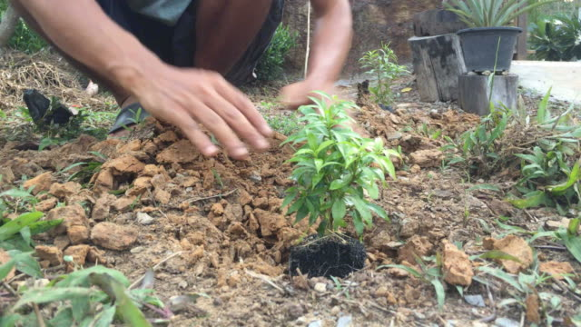 Hands planting a tree video