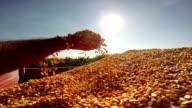 Hands Pouring Corn Kernels video