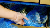 Hands reveal packing box with fish: frozen fish exhibit. Inspection of fish stock video