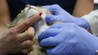 hands vet shaved cat's neck video