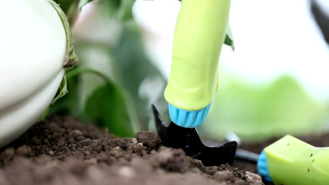 Hands with tools work the soil in the vegetable garden of white eggplant video