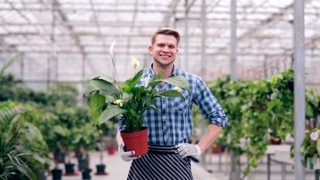 Handsome florist holding spathiphyllum video