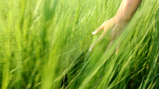 handtouchingtheearsofgrassinafield video