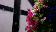 Hanging baskets of Petunias and Lobelias video